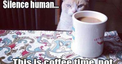 Silence Human... - Cat humor