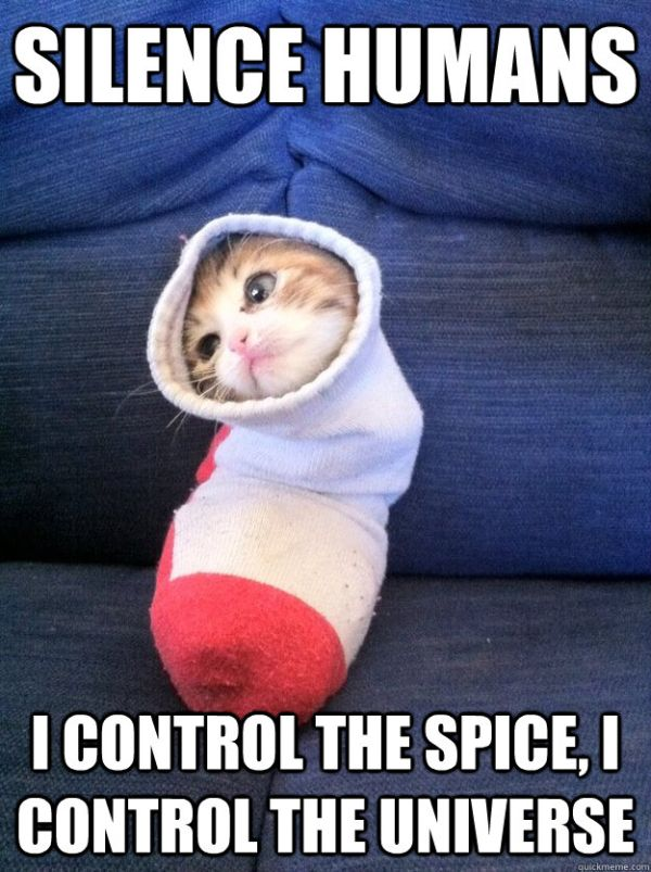 Flood Cat-humor-silence-humans-i-control-spice-i-control-universe-socks