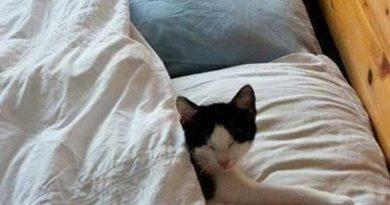 Sorry! - Cat humor