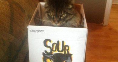 Sour Puss - Cat humor