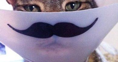 The New Mustache Cone - Cat humor