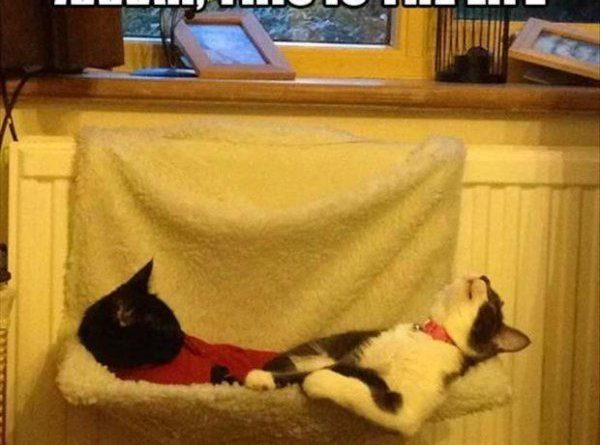 Aaaaah, This Is The Life - Cat humor