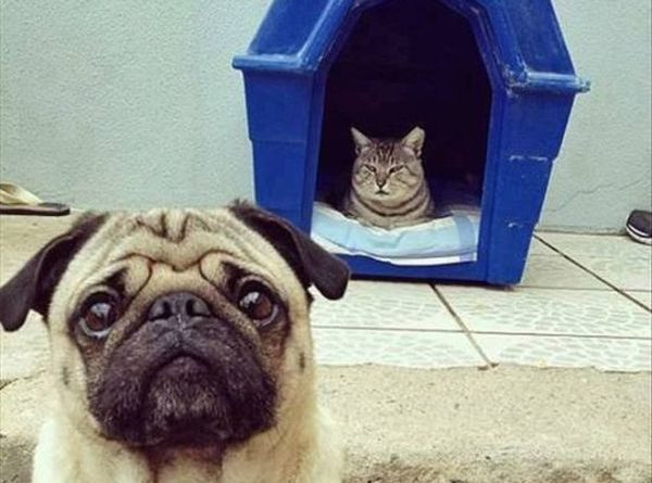 Today The Doghouse - Cat humor