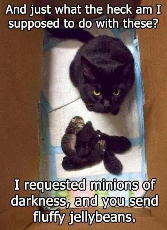 I Requested Minions Of Darkness - Cat humor
