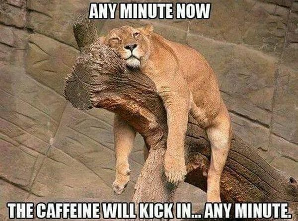 Any Minute Now - Cat humor