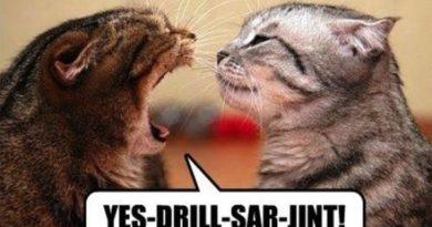 Army Cat - Cat humor