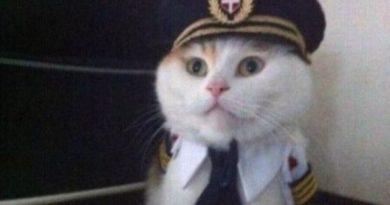 Attention Ladies And Gentleman - Cat humor