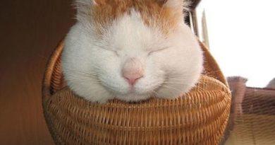 Basketcat - Cat humor