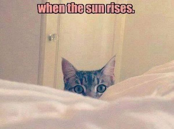 Beginning Of The Day - Cat humor