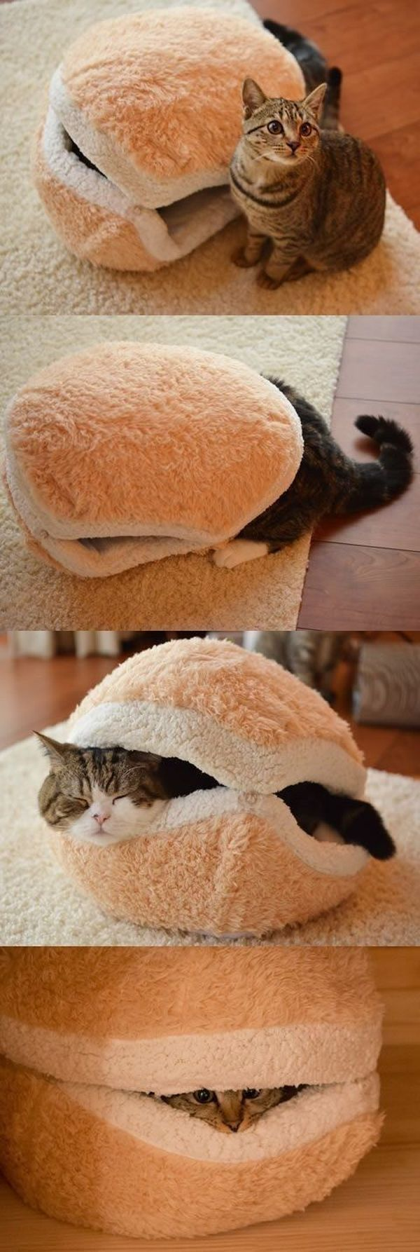 Cat Burger - Cat humor