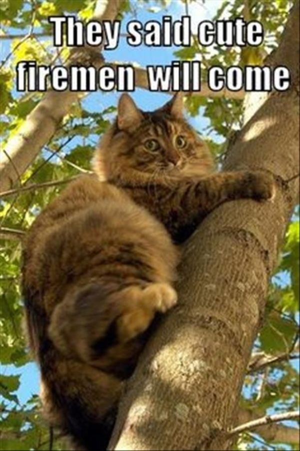 I Don't Want To Come Down - Cat humor