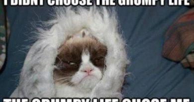 Grumpy Life - Cat humor