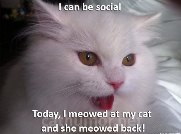 I can be social - Cat humor