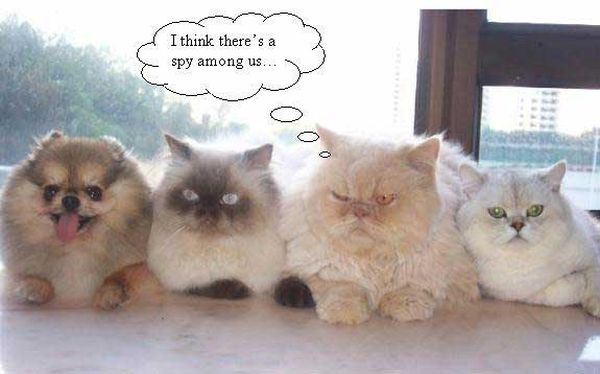I Think There's A Spy Among Us - Cat humor