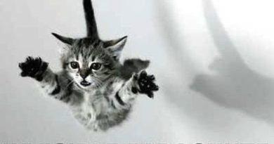 Invisible Parachute - Cat humor
