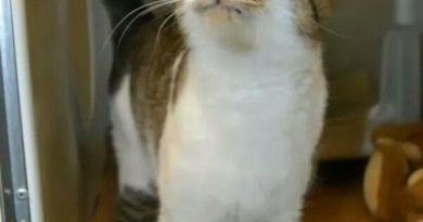 Kitty Is Pleased - Cat humor