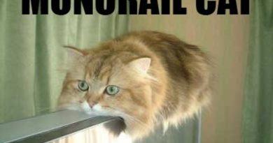 Monorail Cat - Cat humor