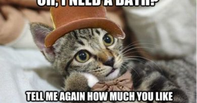 Oh! I Need A Bath? - Cat humor