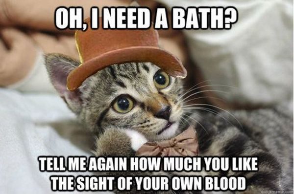 Oh! I Need A Bath? - Cat humor