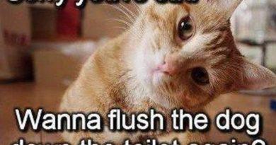 Sorry You're Sad - Cat humor