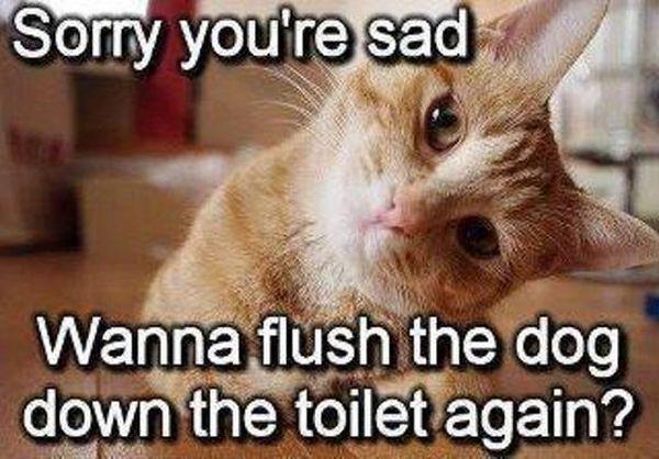 Sorry You're Sad – Cat Humor