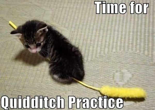 Time For Quidditch Practice - Cat humor