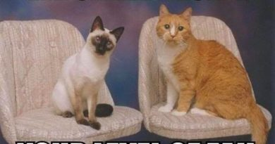We Shall Decide - Cat humor