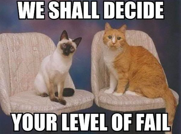 We Shall Decide - Cat humor
