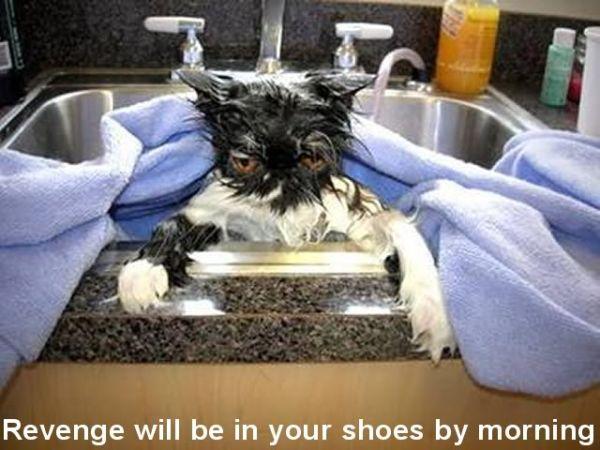 Revenge Will Be... - Cat humor