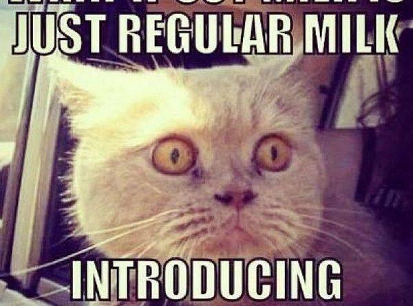 What If Soy Milk Is Just Regular Milk - Cat humor