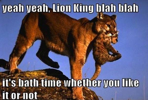 Yeah Yeah, Lion King - Cat humor