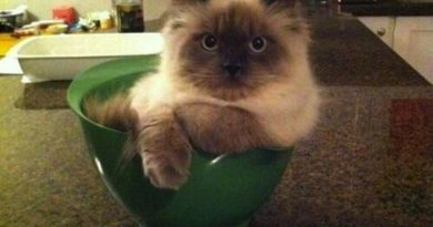 Wait, You Need This Bowl? - Cat humor