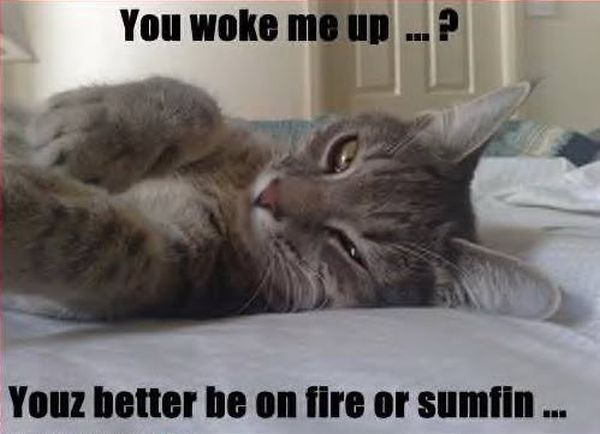 You Woke Me Up...? - Cat humor