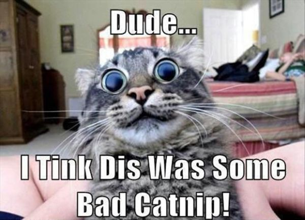Dude... - Cat humor