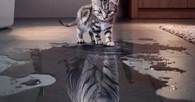 Believe In Yourself - Cat humor