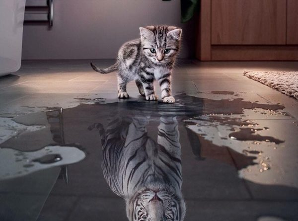 Believe In Yourself - Cat humor