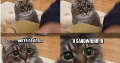 Can't Help Noticing... - Cat humor