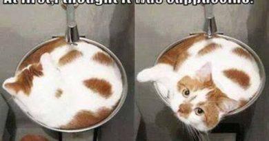 Catppucciono - Cat humor
