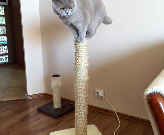 A Cat Post - Cat humor