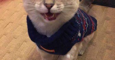 Christmas Sweater - Cat humor