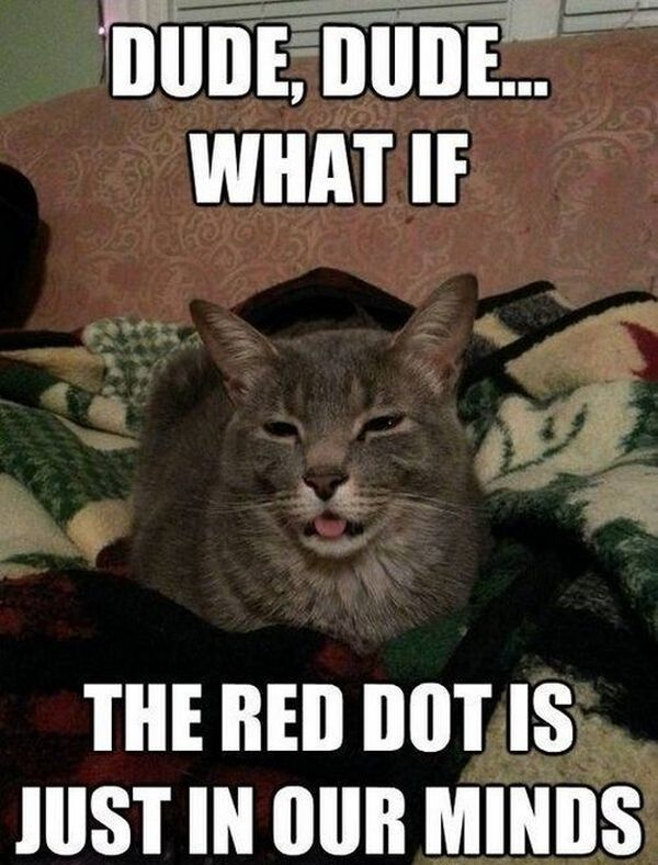 Dude, What If... - Cat humor
