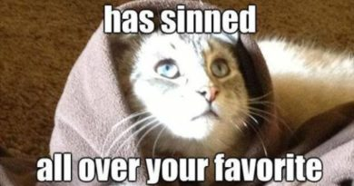Forgive Me Father... - Cat humor