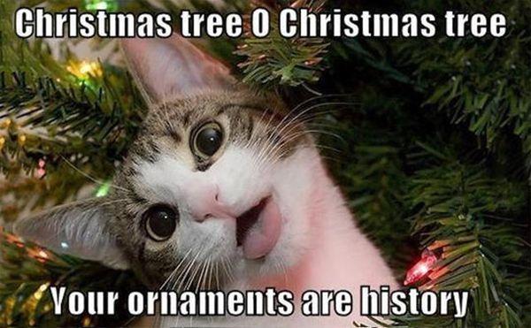 cat-humor-funny-Christmas-tree-ornaments-are-history.jpg