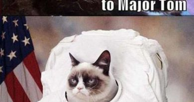 Ground Control To Major Tom - Cat humor