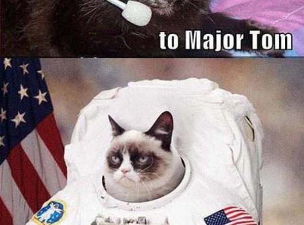 Ground Control To Major Tom - Cat humor
