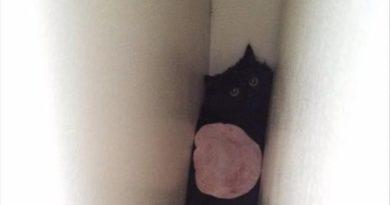 Ham Cat - Cat humor
