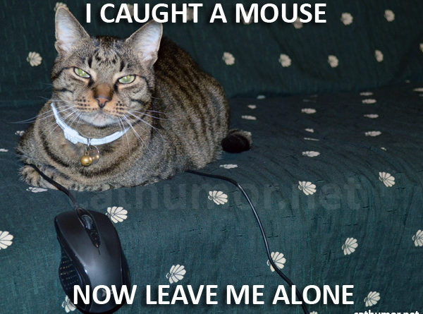 I Caught A Mouse - Cat humor