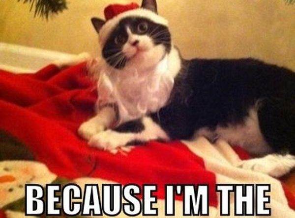 I Destroyed Your Other Gifts - Cat humor