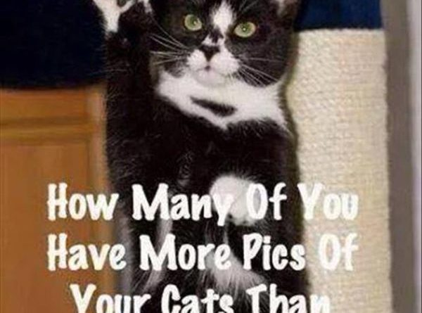 I Have A Question - Cat humor