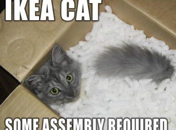 IKEA Cat - Cat humor